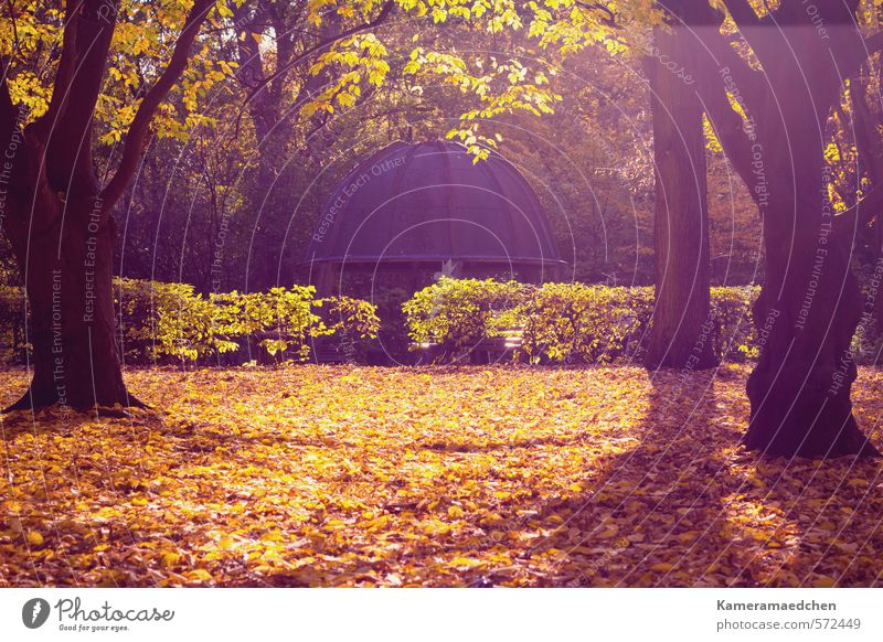 autumnal Nature Sun Autumn Tree Leaf Park Esthetic Moody Calm Idyll Environment Colour photo Exterior shot Deserted Sunlight