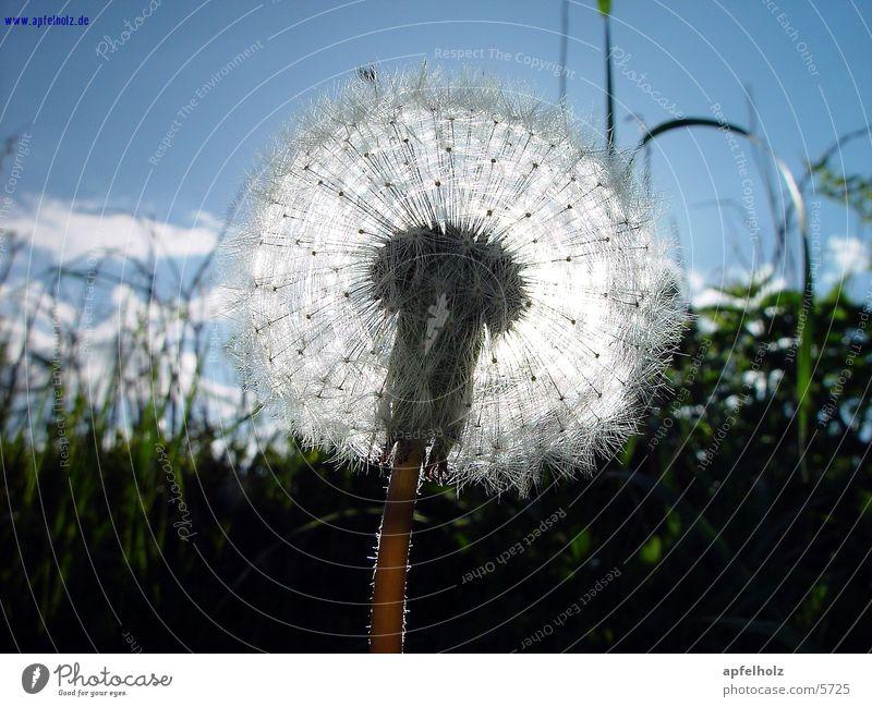 Sky Sun Flower Grass Spring Macro (Extreme close-up)