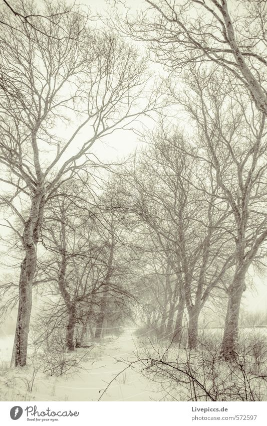 old avenue Environment Nature Landscape Plant Sky Clouds Winter Weather Bad weather Wind Gale Fog Snow Snowfall Tree Traffic infrastructure Street Dark Fresh