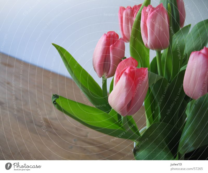 tulips_2 Pink Red Green Tulip Flower Table Brown Wall (building) Spring Fresh Partially visible Room Interior shot