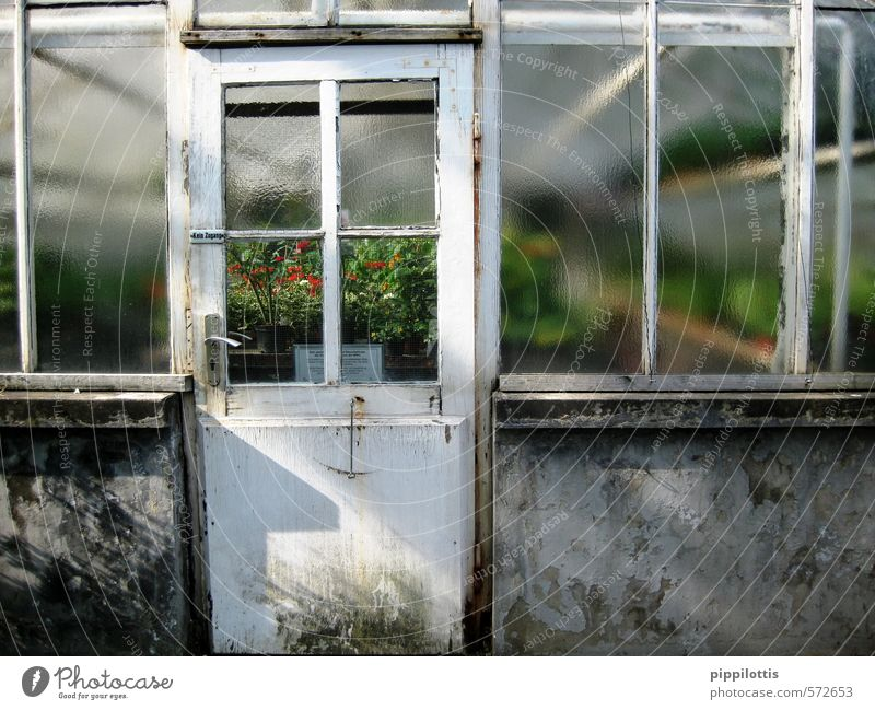 View into the green Gardening Agriculture Forestry Environment Nature Landscape Plant Climate Climate change Greenhouse Wall (barrier) Wall (building) Window