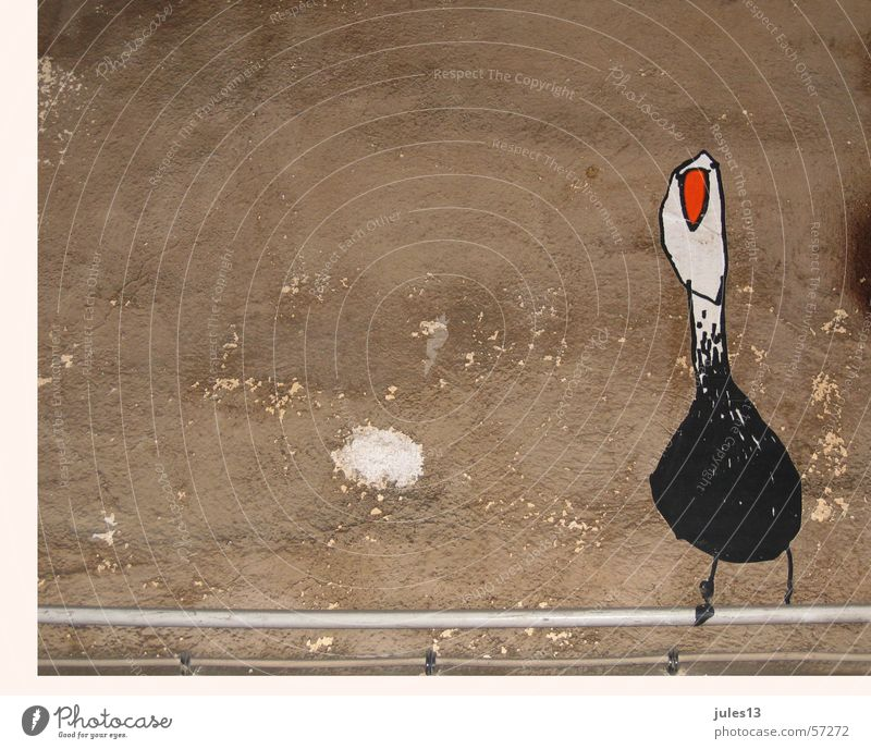 White Red Black Wall (building) Wall (barrier) Graffiti Brown Bird Plaster Transmission lines Wall decoration