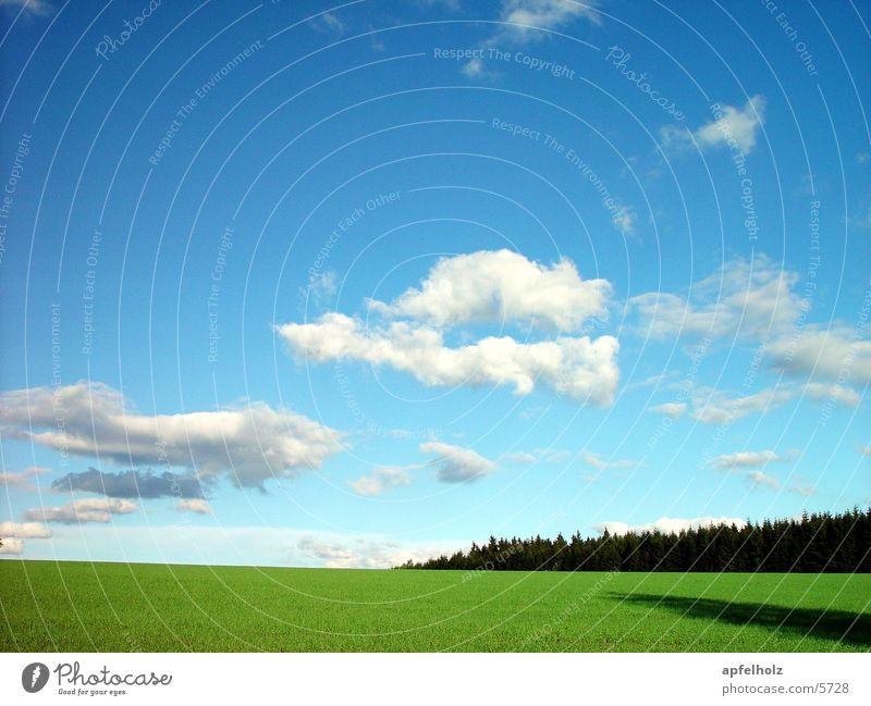 Clouds Forest Meadow Blue sky May