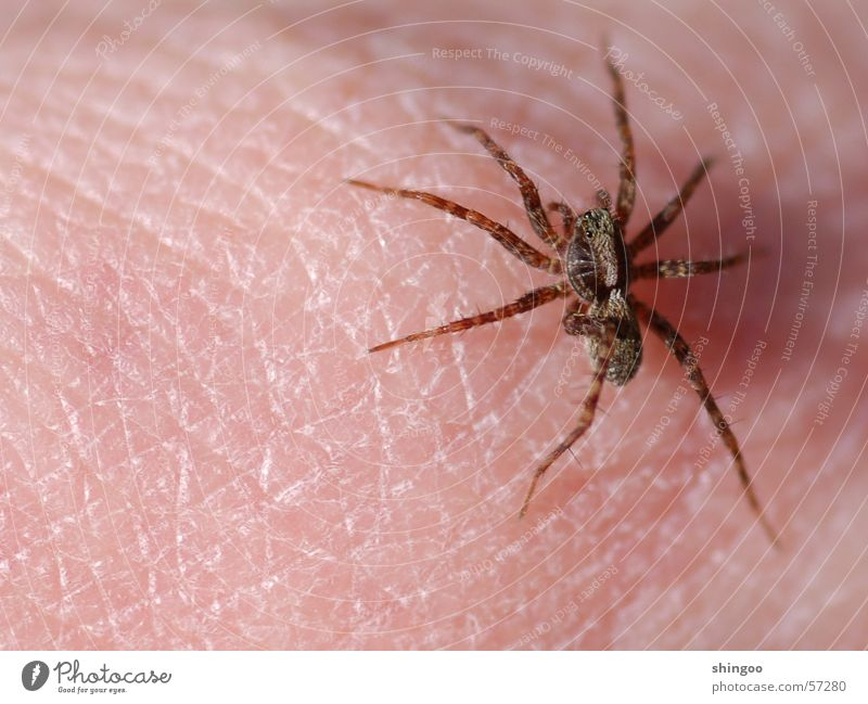 spider Skin Hand Nature Animal Wild animal Spider Animal face 1 Touch Movement Crawl Sit Threat Disgust Creepy Small Near Brown Pink Fear Dangerous Nerviness