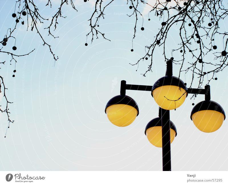 lantern Lantern Yellow Round Tree Sphere Branch Blue Sky Weather Exterior shot