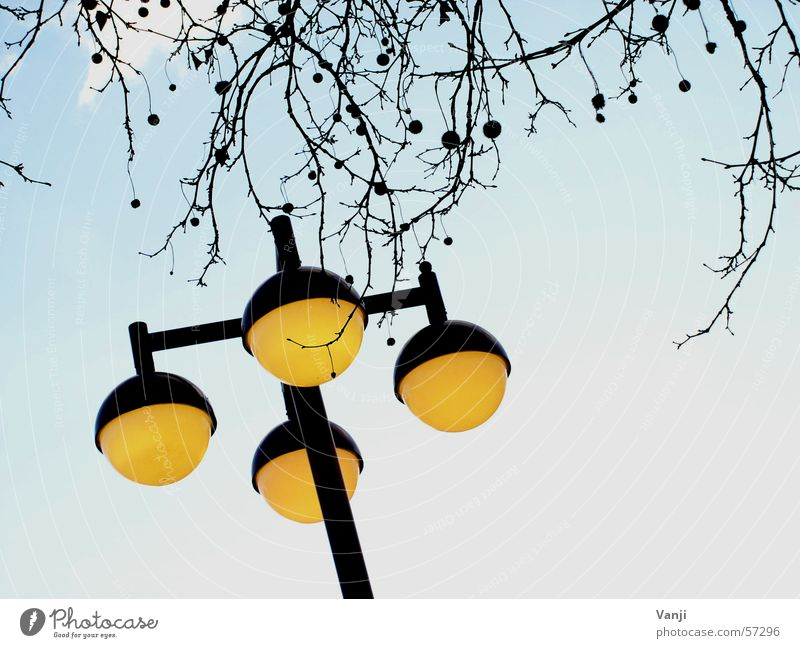 Sky Tree Blue Yellow Weather Crazy Round Branch Sphere Lantern