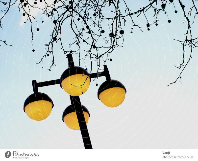 Sky Tree Blue Yellow Weather Crazy Round Branch Sphere Lantern
