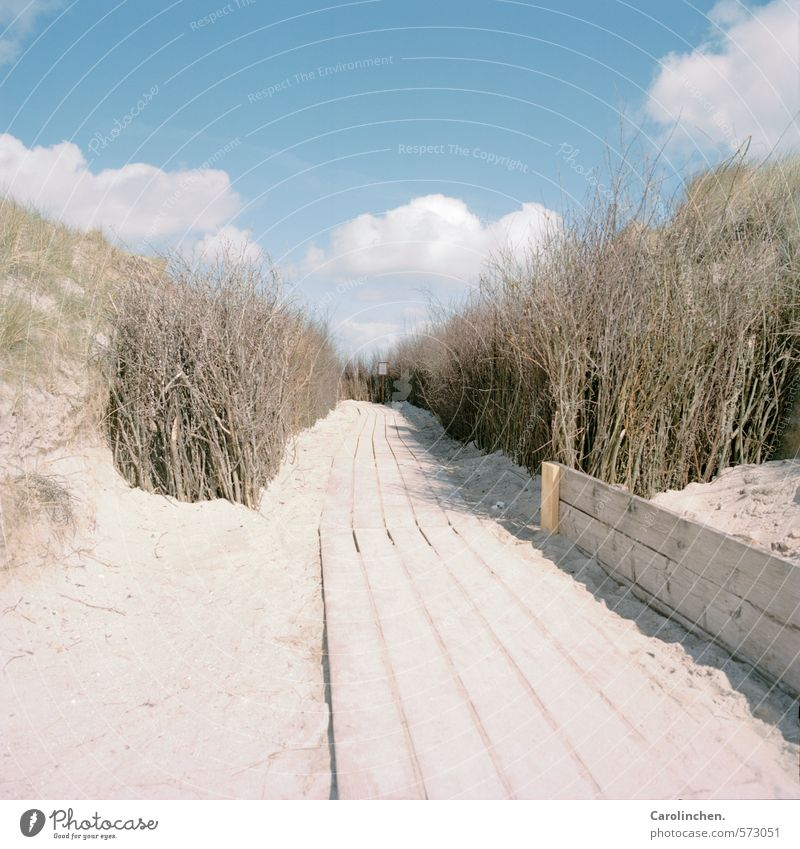 wrong track Harmonious Contentment Hiking Nature Landscape Sand Water Clouds Spring Bushes Beach North Sea Happy Anticipation Lanes & trails Wood Helgoland