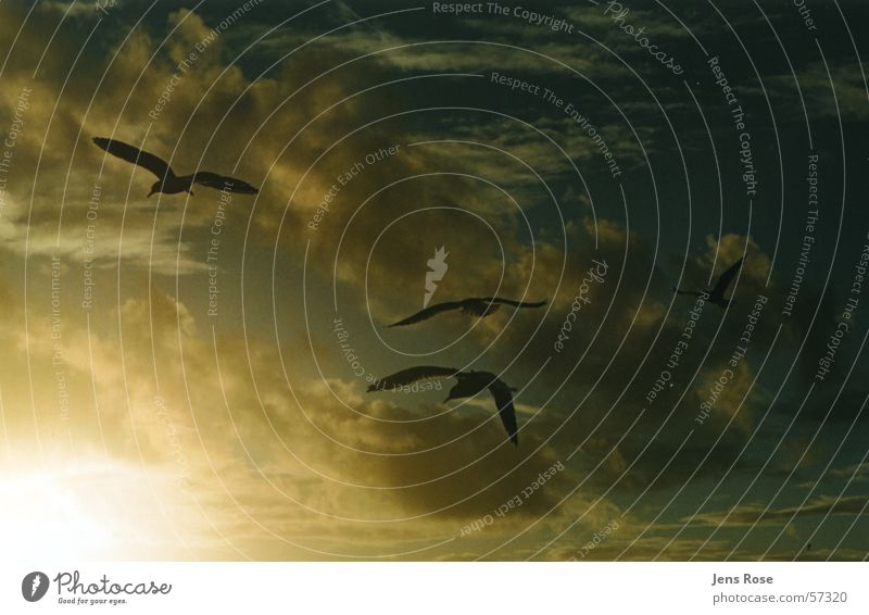 gulls To go for a walk Ocean Beach Reflection Prerow Autumn Sunset Feet Sand Water Baltic Sea Wind Evening Flying Aviation