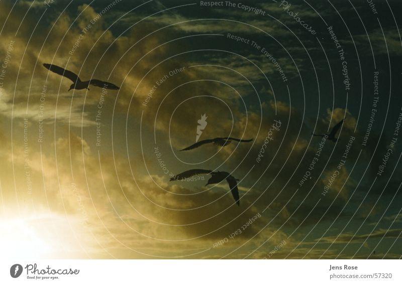 Water Ocean Beach Autumn Feet Sand Wind Flying Aviation To go for a walk Baltic Sea Darss Prerow