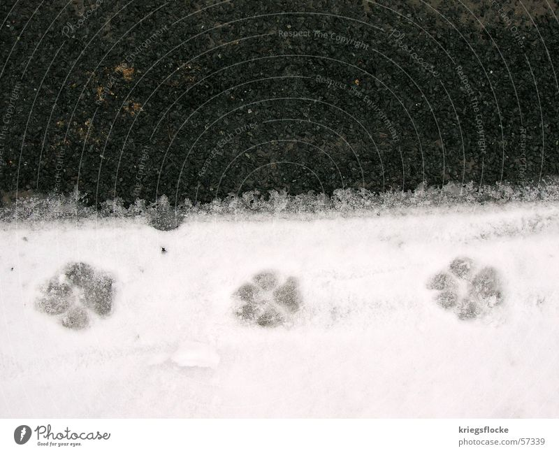 White Black Street Snow Dog Animal foot 3 Asphalt Tracks Symbols and metaphors Footprint Paw Animal tracks Imprint Walk the dog