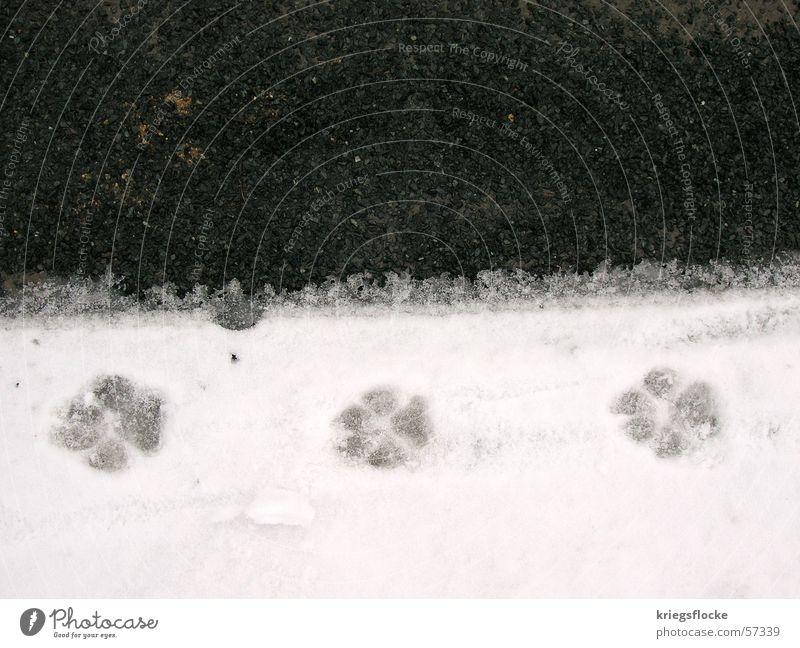 White Black Street Snow Dog Animal foot 3 Asphalt Tracks Symbols and metaphors Footprint Paw Animal tracks Imprint Walk the dog