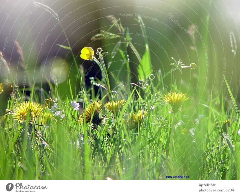 airy fragrant meadow Meadow Flower Nature clean world