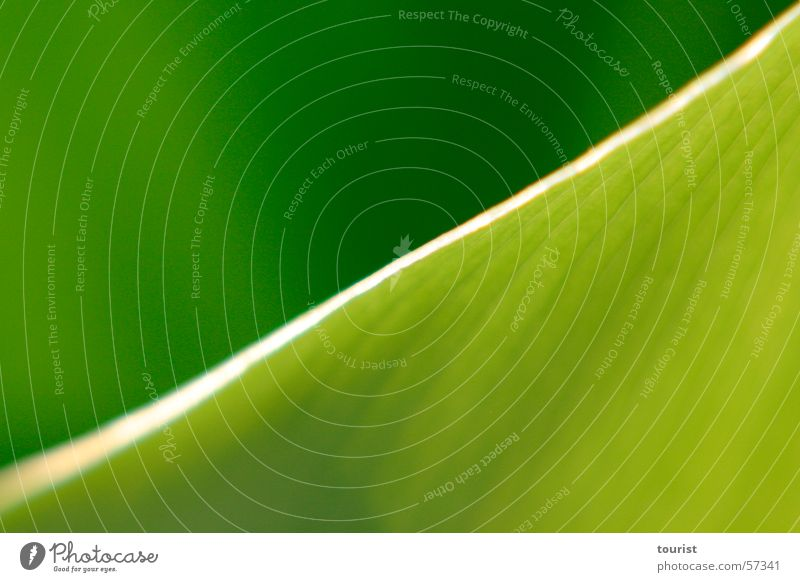 Green Leaf Diagonal