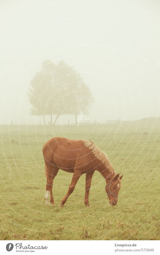 Stallion Karino Environment Nature Landscape Sky Spring Autumn Bad weather Fog Meadow Field Brown Gray Green Silver White Subdued colour Exterior shot Morning