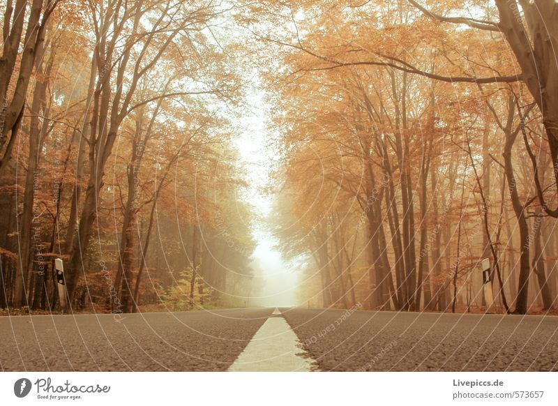 Road through autumn Environment Nature Landscape Plant Water Sky Autumn Fog Tree Leaf Park Forest Transport Traffic infrastructure Street Warmth Soft Serene