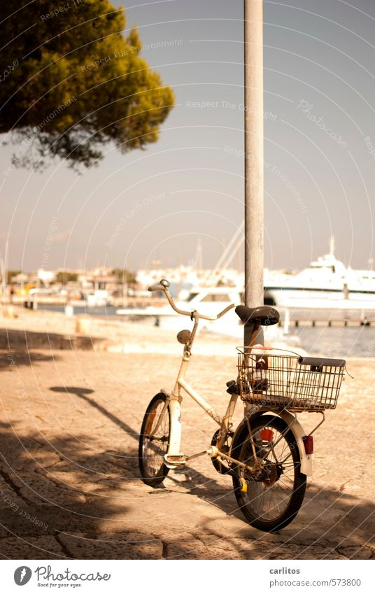 Get a roll Cloudless sky Summer Beautiful weather Warmth Coast Ocean Harbour Swimming & Bathing Stone pine Jetty Yacht Motorboat Bicycle Luxury