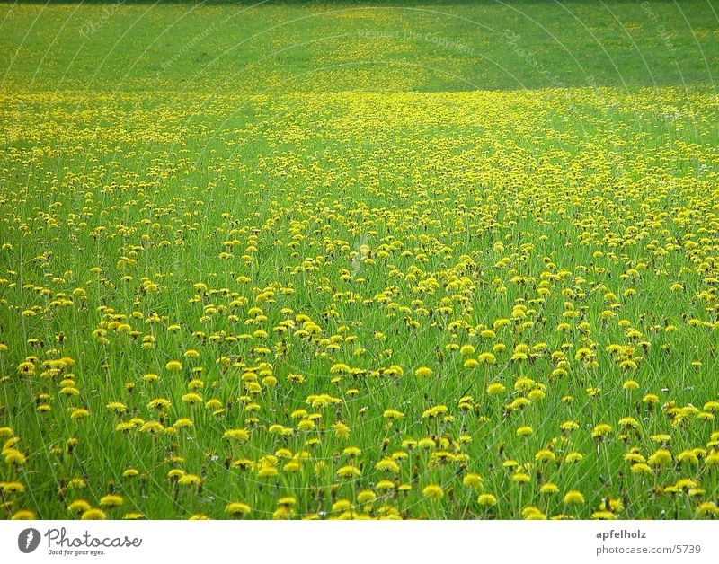infinite flower meadow Spring Meadow Background picture