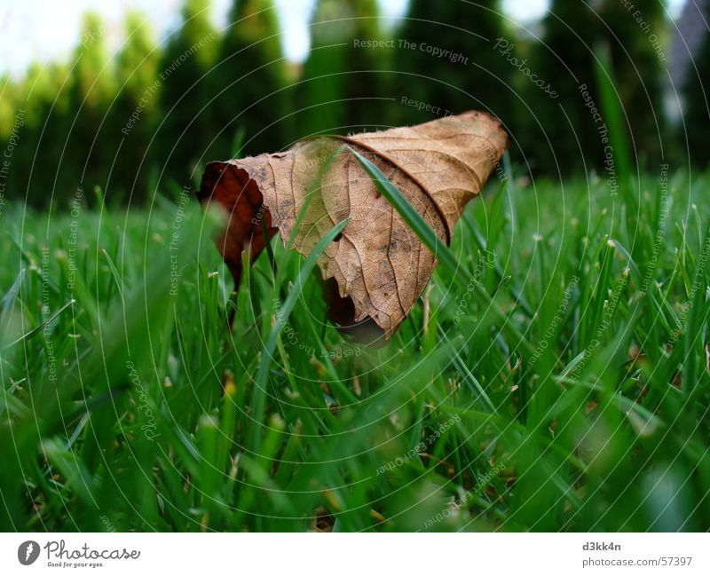 leaf Leaf Meadow Green Brown Nature grass