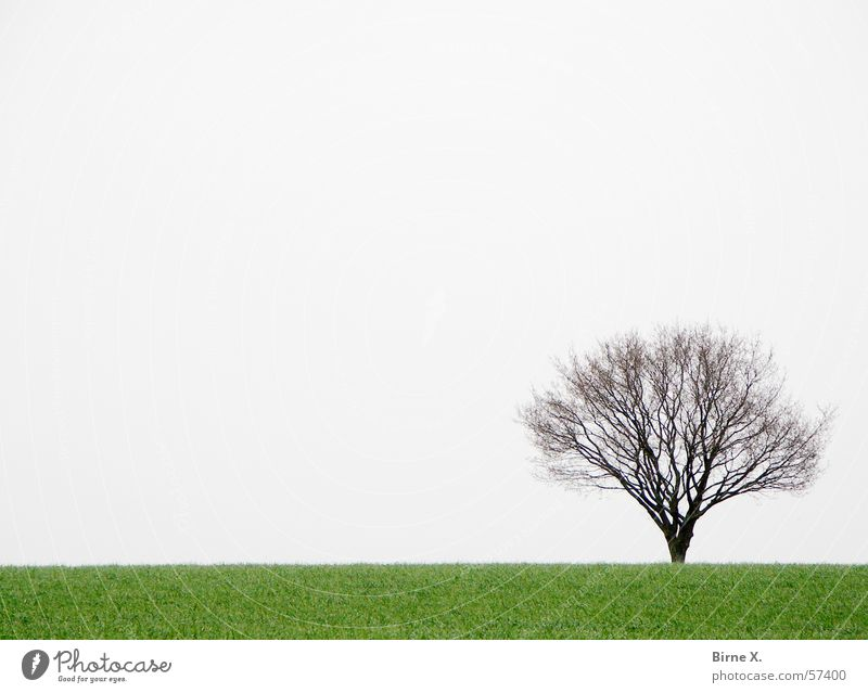 Lonely little tree Tree Field Winter Spring Grass Meadow Loneliness Gloomy Bad weather Gray Green Branch Sky
