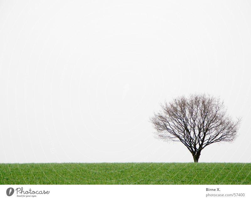 Sky Tree Green Winter Loneliness Meadow Grass Spring Gray Field Gloomy Branch Bad weather