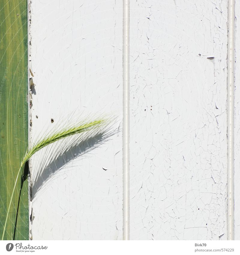 Green White Plant Wall (building) Dye Grass Wall (barrier) Spring Gray Wood Garden Food Door Growth Beautiful weather Fresh