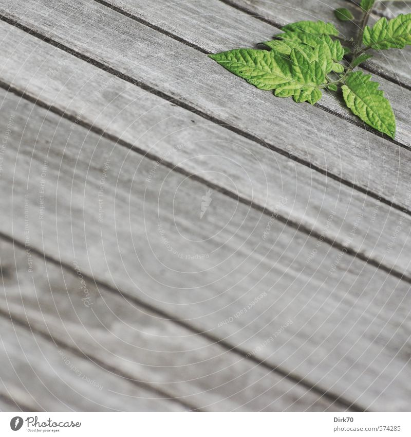 Green Plant Leaf Black Healthy Eating Gray Wood Natural Line Garden Lie Growth Fresh Table Stripe Twig