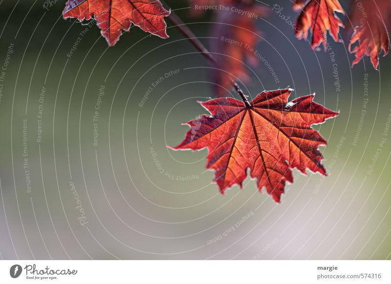 Nature Beautiful Plant Tree Red Landscape Leaf Animal Forest Environment Senior citizen Autumn Death Garden Bushes Esthetic