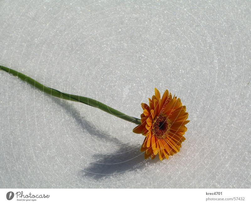 White Flower Green Snow Bright Orange