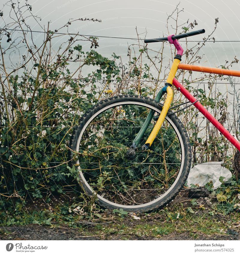 Portobello IX Nature Means of transport Cycling Multicoloured Esthetic Design Uniqueness Art Bicycle Old Retro Retro Colours Fence Barrier Hedge Bushes Green