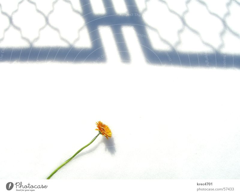 Flower in the snow 1 White Green Overexposure Snow Orange Shadow Bright