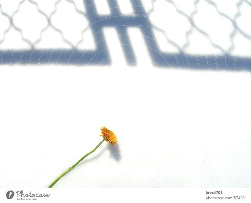 White Flower Green Snow Bright Orange Overexposure