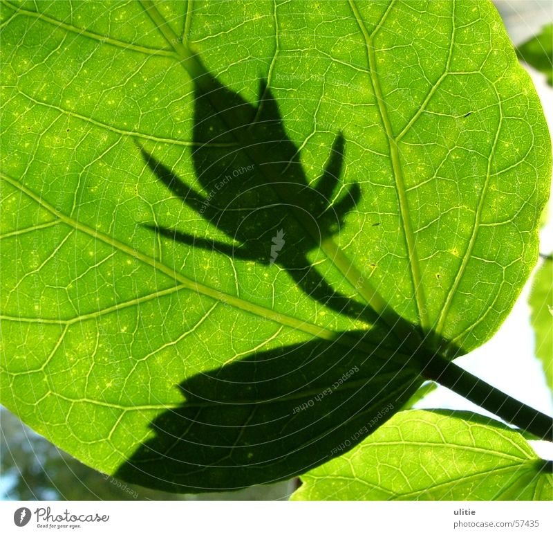 Flower Green Plant Leaf Blossom Visual spectacle Prongs