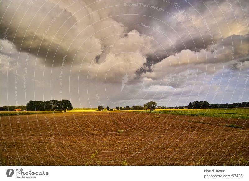 Sky Beautiful Colour Tree Landscape Clouds Meadow Moody Dream Field Agriculture Heavenly God Deities
