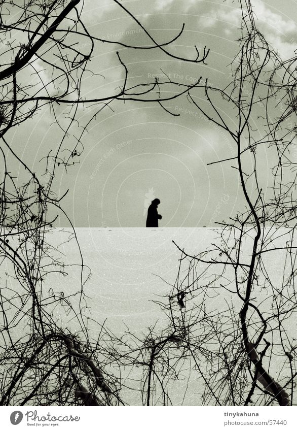 The rare species of the picture frame shrub Winter Clouds Bushes Silhouette Loneliness Undergrowth Snow Branch To go for a walk Frame