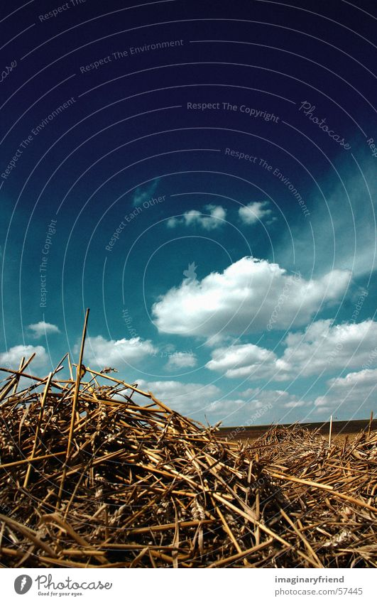 Sky Clouds Field Countries Harvest Grain