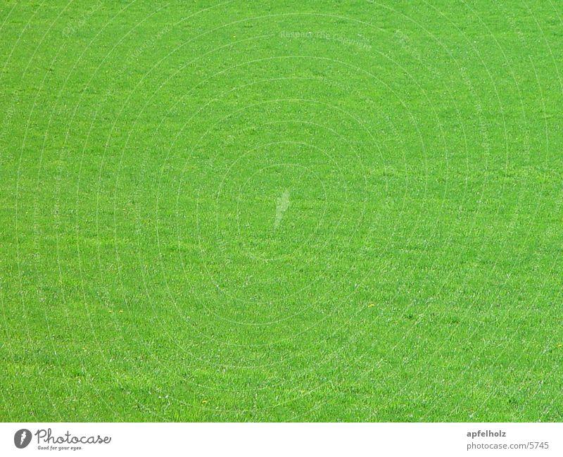 green Meadow Spring Green