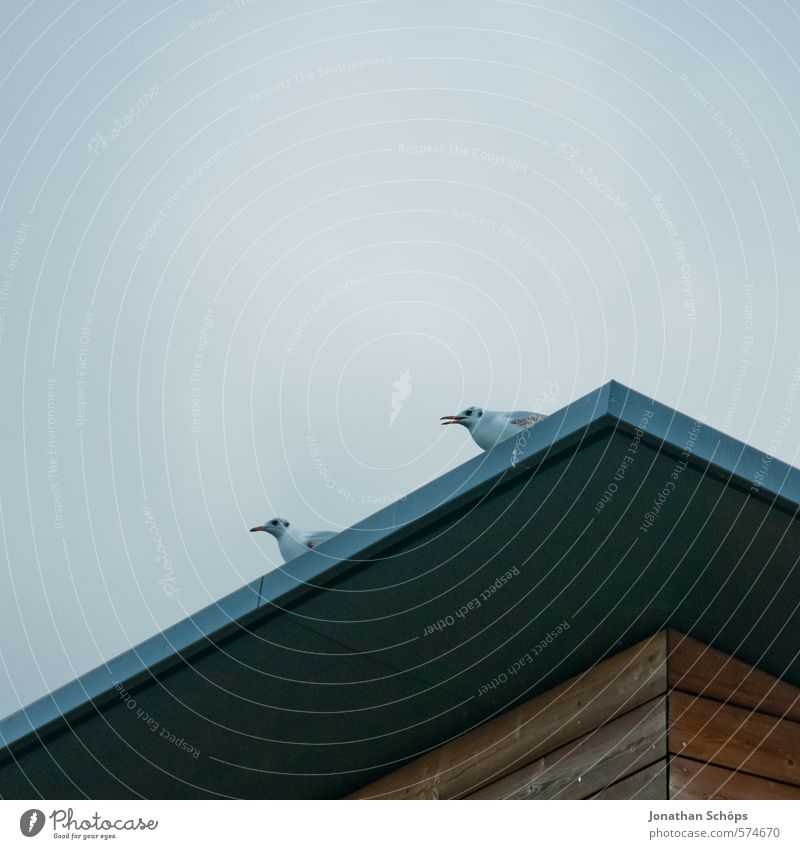 Sky Blue Animal Winter Cold Gray Bird Pair of animals Empty Esthetic In pairs Corner Observe Roof Wing Copy Space