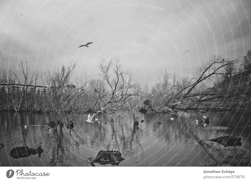 Sky Nature Water Plant Tree Landscape Animal Winter Dark Environment Death Lake Bird Esthetic Threat Group of animals