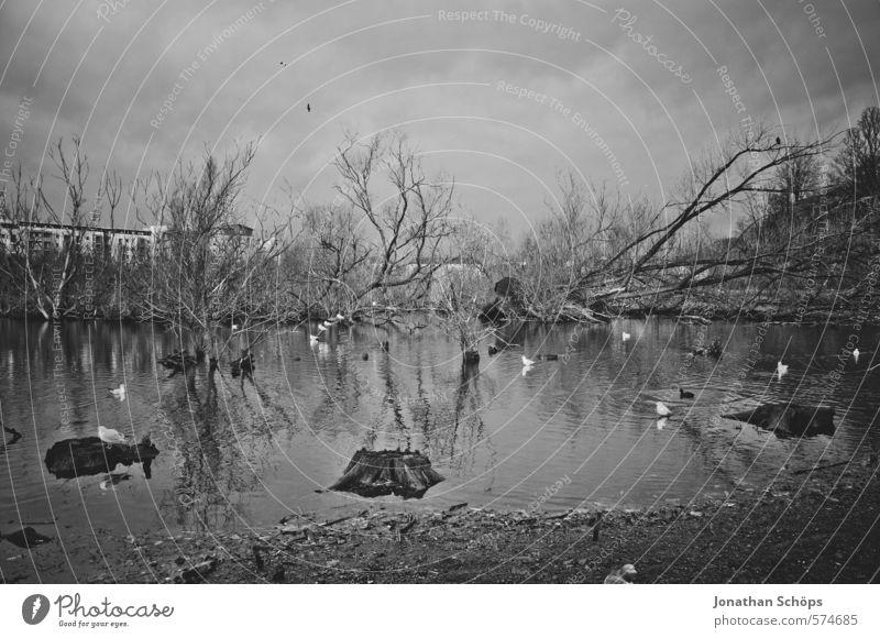 Sky Nature Water Plant Tree Landscape Animal Winter Dark Environment Death Lake Bird Threat Group of animals Lakeside