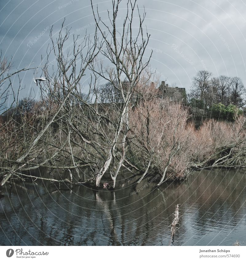Lochend Park II Environment Nature Landscape Sky Plant Tree Lakeside Bog Marsh Pond Esthetic Dark Creepy Death Threat Scotland Great Britain Water