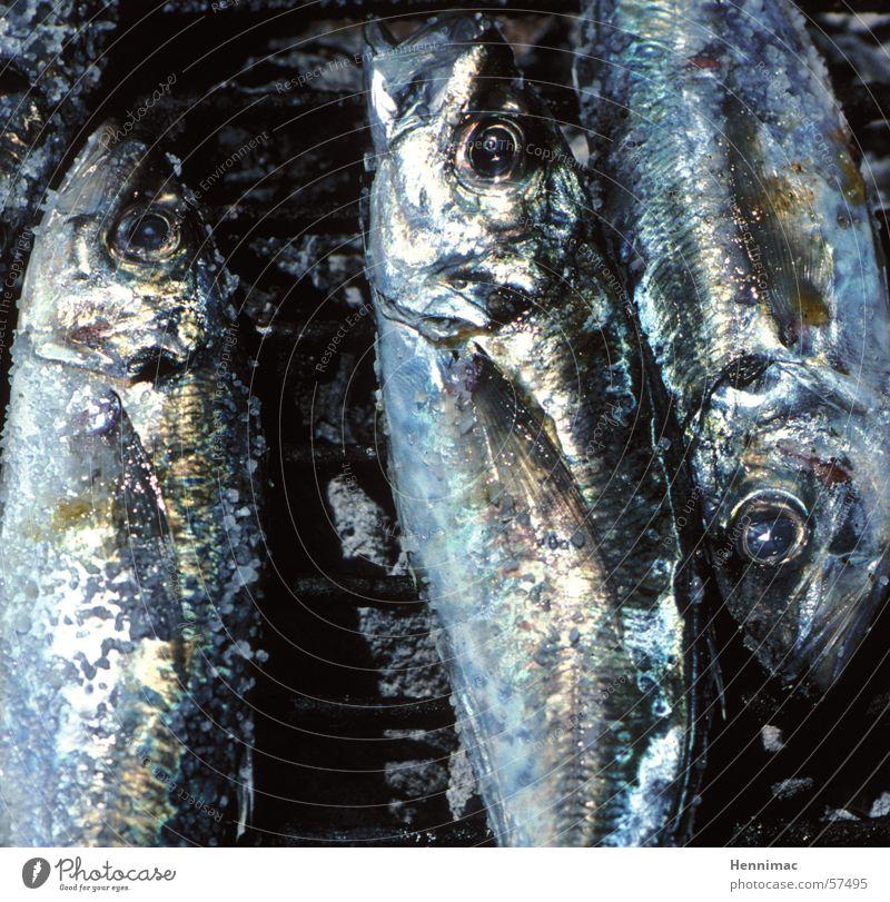 Blue Water Ocean Animal Black Eyes Eyes Death Lake Lie Fresh 3 Nutrition Fish Cooking & Baking Catch
