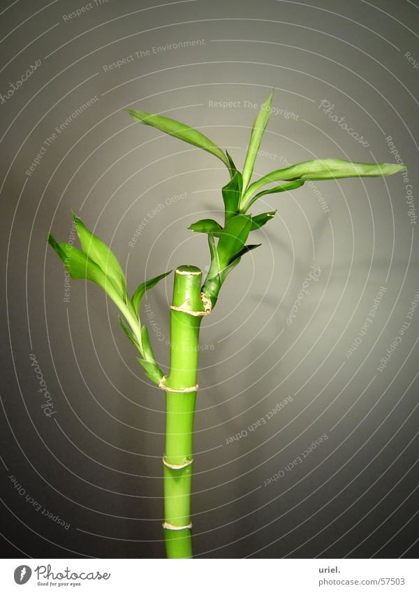 Nature Green Plant Garden Park Asia Decoration Blade of grass Bamboo stick