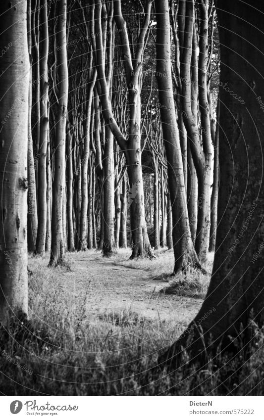 Tight Nature Sand Spring Tree Grass Forest Dark Black & white photo Exterior shot Deserted Copy Space bottom Day Light Shadow Contrast Silhouette