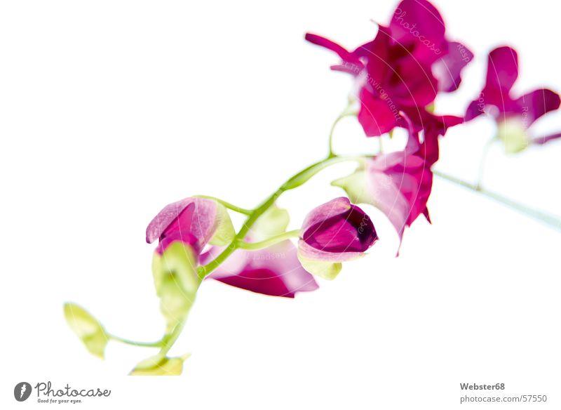 Beautiful Flower Green Plant Garden Park Art Pink Orchid