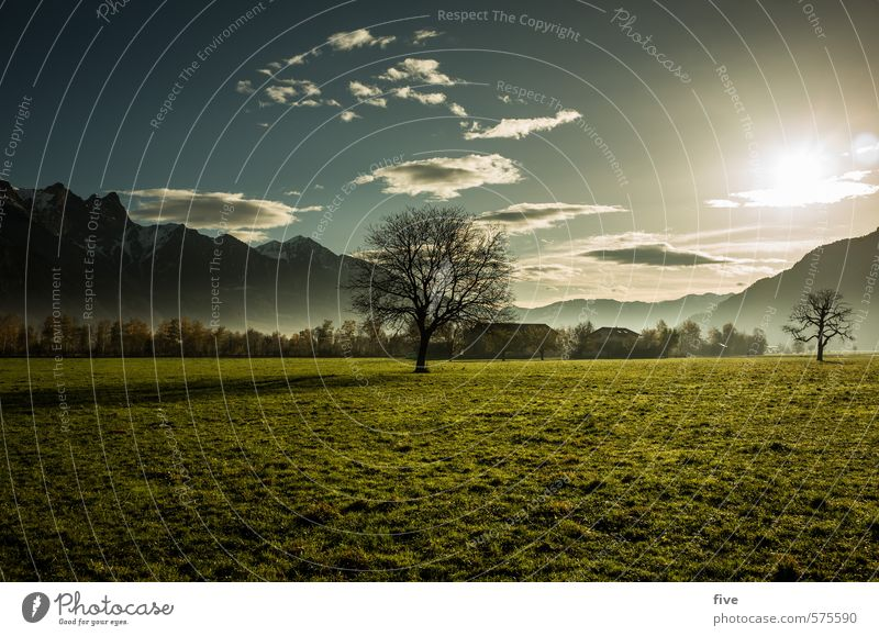 Sky Nature Plant Sun Tree Landscape Flower Clouds Far-off places Forest Environment Mountain Warmth Meadow Autumn Grass