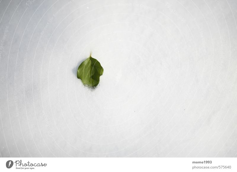 Leaf in the snow Environment Nature Landscape Plant Animal Winter Ice Frost Snow Snowfall Flower Foliage plant Garden Mountain Snowcapped peak Outskirts Park