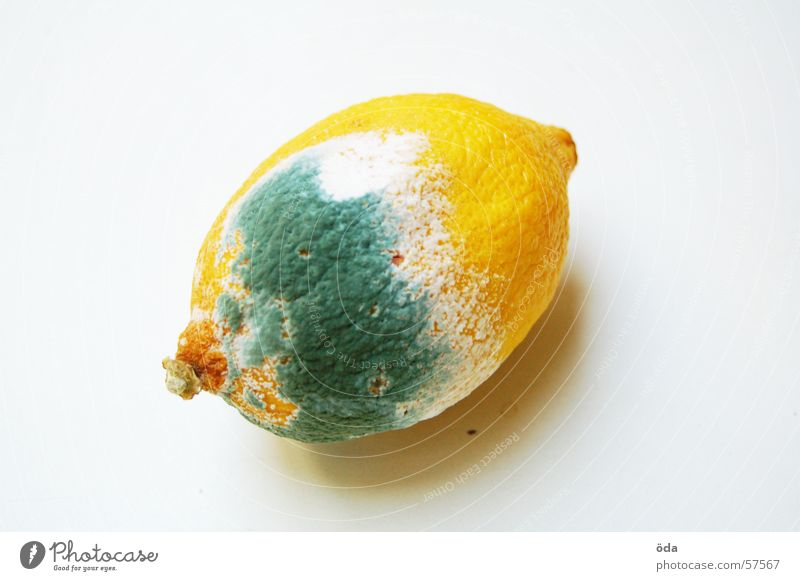 Nutrition Food Fruit Mushroom Lemon Spoiled Mold Unhealthy Citrus fruits Bum around