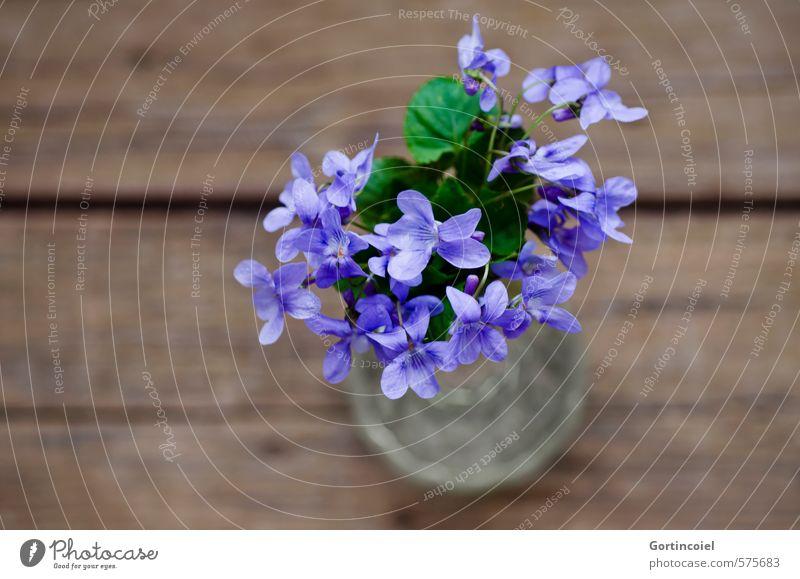 Purple greetings Flower Blossom Decoration Bouquet Beautiful Violet Violet plants Vase Colour photo Studio shot Close-up Copy Space left Copy Space bottom