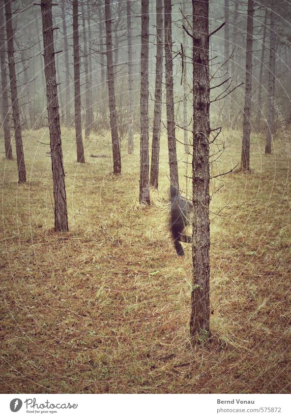 Run Forest! Masculine Man Adults 1 Human being 45 - 60 years Environment Nature Autumn Plant Tree Brown Gray Green Black Escape Walking Hooded (clothing) Jacket
